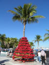 Poinsetta Tree